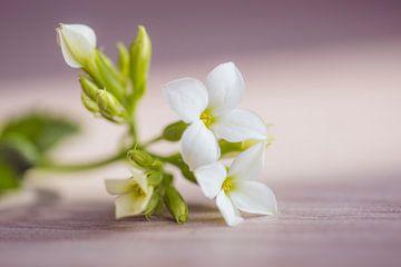 tedere bloemetjes van Kristof Ven