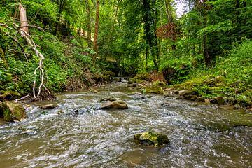 Mullerthal Trail IX