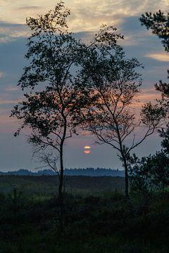 Zonsondergang op de veluwe van leon elias