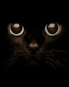 Ogen van een kitten
