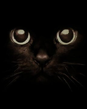Augen eines Kätzchens von Jan Keteleer