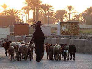 Schaapherder Egypte met takken op het hoofd van