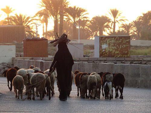 Schaapherder Egypte met takken op het hoofd