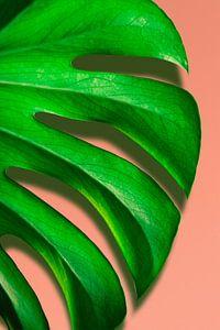 Blad van Monstrosa Deliciosa plant voor roze muur van Jeroen Cox
