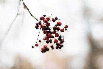 Berry branch van The Pixel Corner