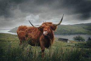 Schotse Hooglander von Lukas De Groodt