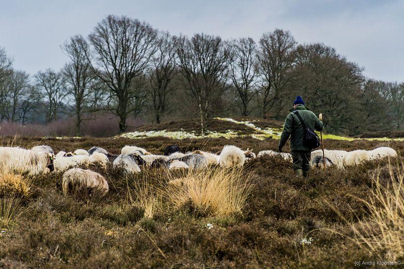herder en schapen van Andre Klooster