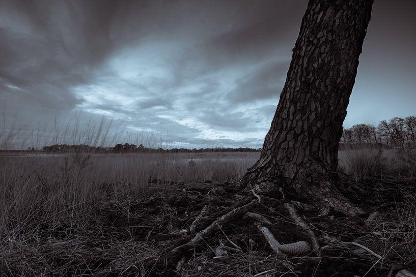 Strabrechtse Heide 185 van Deshamer