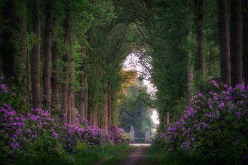 Bospad door de Rhododendrons van Edwin Mooijaart