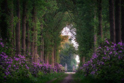 Bospad door de Rhododendrons van