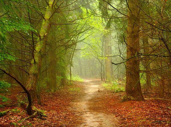 Forest-Theme van Caroline Lichthart