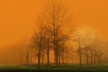 Mysteriöser Nebel im Wald 2 von Marcel Kieffer
