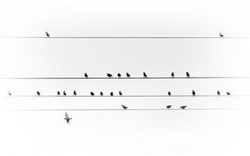 Vogels op een stroomkabel van Thomas Heitz