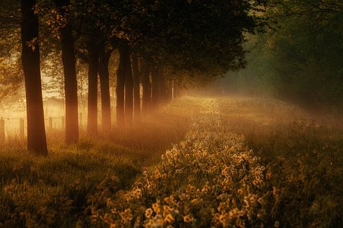 Een pad geplaveid met bloemen........