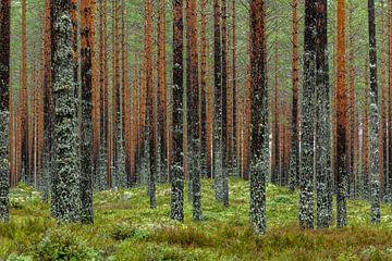 Mauer aus Bäumen von Gerry van Roosmalen
