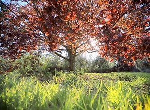 een sprookjesboom in lentelicht... van Els Fonteine