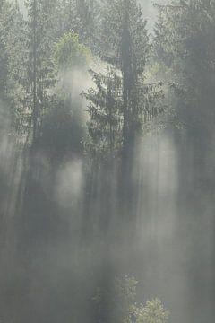 Zonnenstralen en mist in de Zweedse bossen van Mindy Molein
