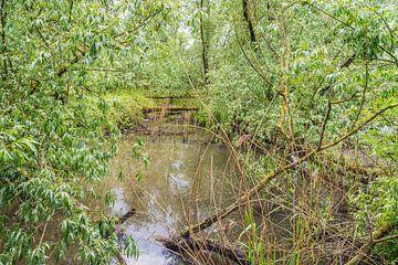 Wildnis in einem niederländischen Naturschutzgebiet von Ruud Morijn