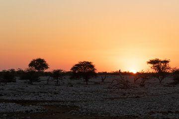 Zonsondergang in het Etosha National Park van GoWildGoNaturepictures