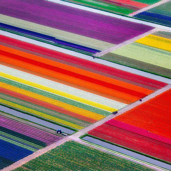 Photo aérienne des champs de tulipes colorés près de Lisse sur Frans Lemmens