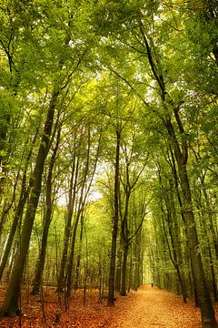 Het bospad sur LHJB Photography