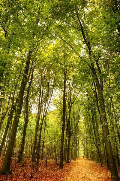 Het bospad van LHJB Photography