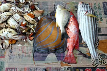Vissen op krant van Annelies van der Vliet