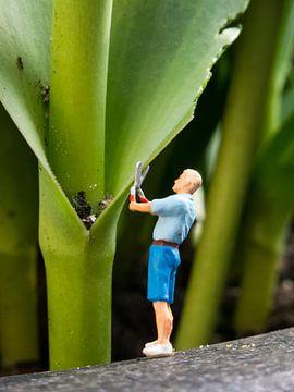 Snoeien van de tulp van Sandra Perquin
