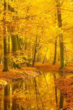 Beek in een beukenbos tijdens een mooie herfstdag van Sjoerd van der Wal