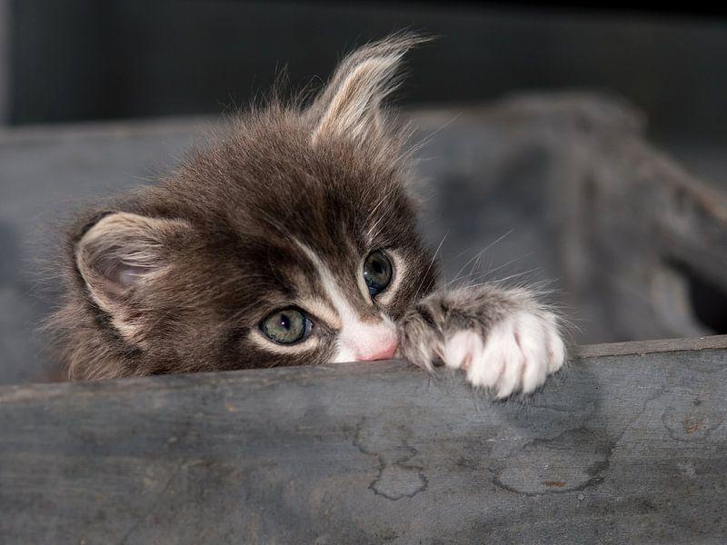 Kitty serie II von Rob Smit