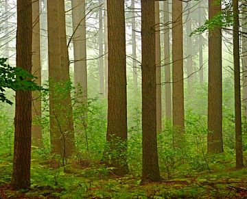 Stammen im Wald von Caroline Lichthart
