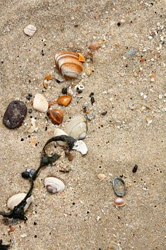 Schelpen op het strand von Margreet Frowijn