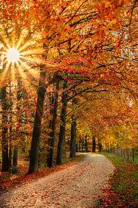 Herfst in Achterhoek van