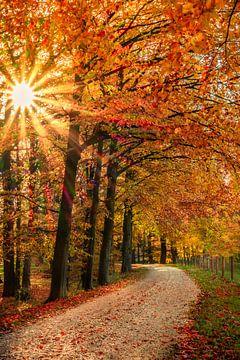 Herfst in Achterhoek van Edward Sarkisian