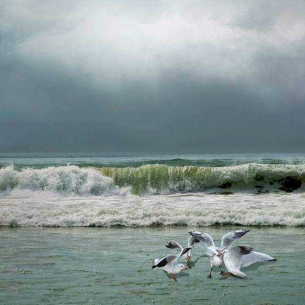 Eilandgevoel - zee - zeemeeuwen van Hannie Kassenaar