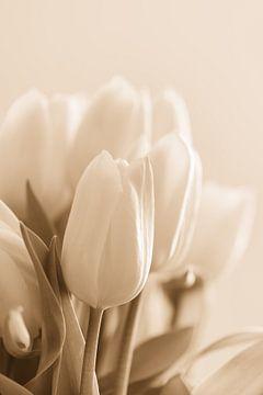 Tulpen von Rik Verslype