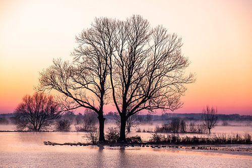 Bomen langs de IJssel, winterlandschap 1