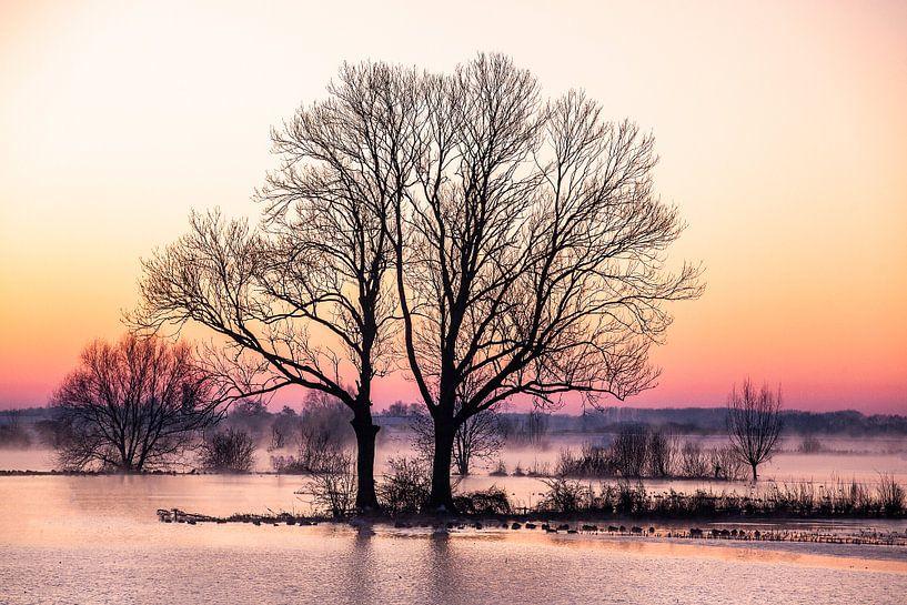 Bomen langs de IJssel, winterlandschap 1 van Wilma Wijnen