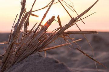 Sand mit Ästen von Ben Hoedt