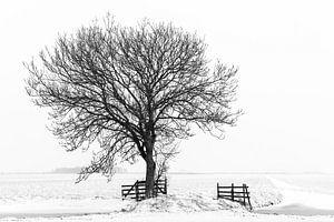 Baum in Winterlandschaft