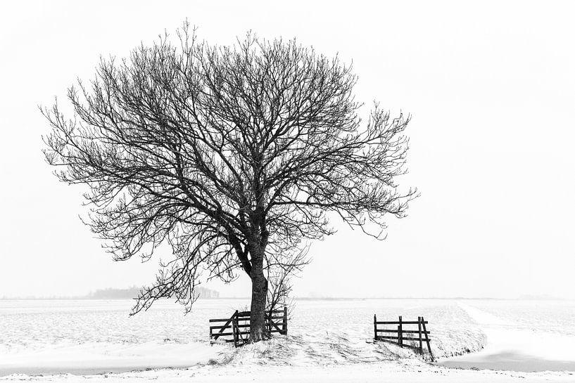 Baum in Winterlandschaft von Beeldbank Alblasserwaard