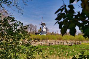 Vue sur le moulin blanc sur Tina Linssen