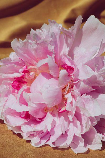 Pioenroos velours close-up van Emilia Aivazian Fotografie