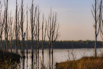 reflectie op de Biesbosch van Tania Perneel
