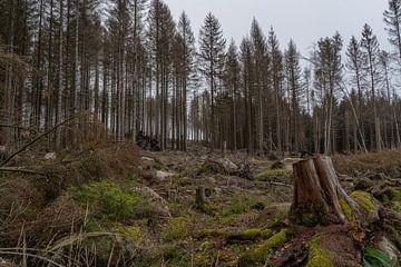Naaldbomen in de Harz van Marc-Sven Kirsch