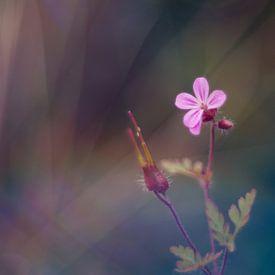 Violette Blume von Mijke Bressers