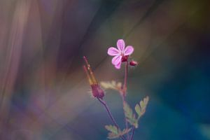 Paarse bloem van Mijke Bressers