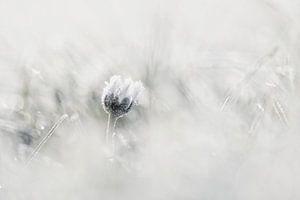 Winter van Sam Dijkstra