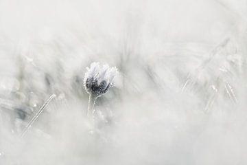 Winter von Sam Dijkstra