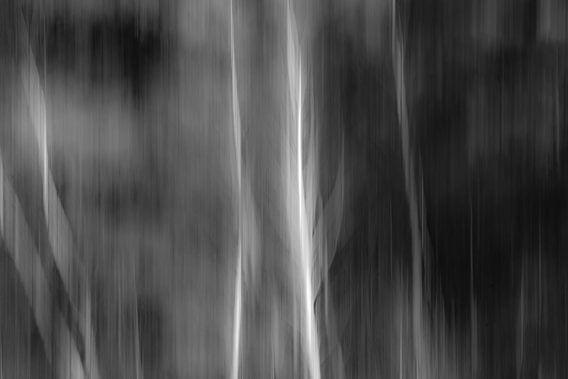 Abstract 'Berkenbos bewerkt'